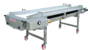 belt table - Grape Sorting